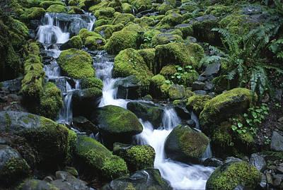 Photograph - Rain Forest Stream by Sandra Bronstein