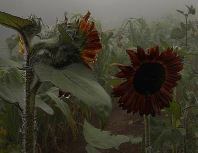 Photograph - Rain In The Sunflower Garden by Diannah Lynch