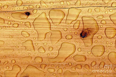 Print featuring the photograph Rain On Wood by Charles Lupica