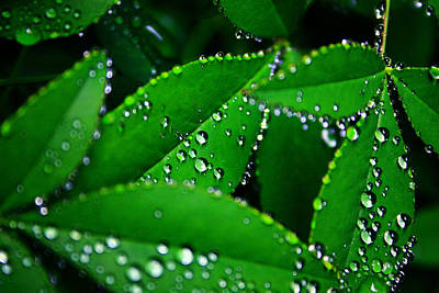 Moisture On Plants Photograph - Rain Patterns by Toni Hopper