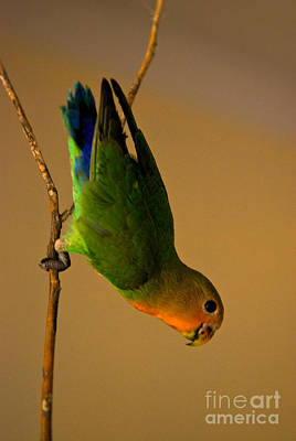 Rainbow Bird Art Print by Syed Aqueel