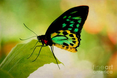 Photograph - Rainbow Butterfly Macro by Peggy Franz