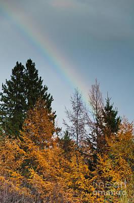 Sara Habecker Folk Print - Rainbow Forest by Cheryl Baxter