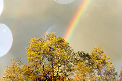 Delicate Mountain Scape Photograph - Rainbow In The Trees by Debra     Vatalaro