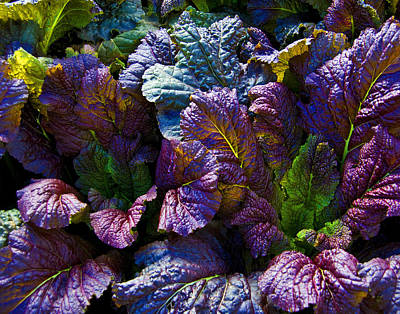 Rainbow Lettuce Original by Rob Outwater