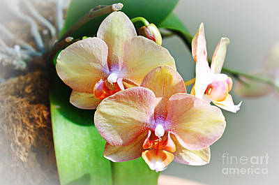 Photograph - Rainbow Orchids by Andee Design
