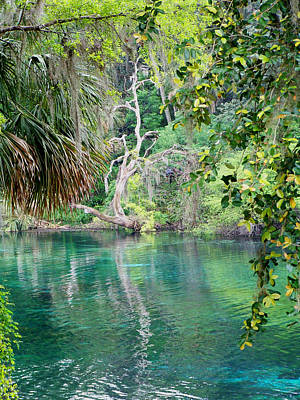 Photograph - Rainbow Springs by Judy Wanamaker