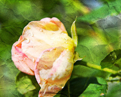 Photograph - Raindrops And Roses by Paula St James