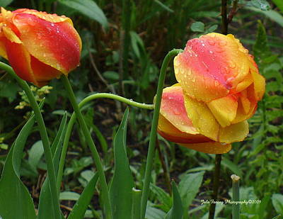 Raindrops And Tulips Art Print