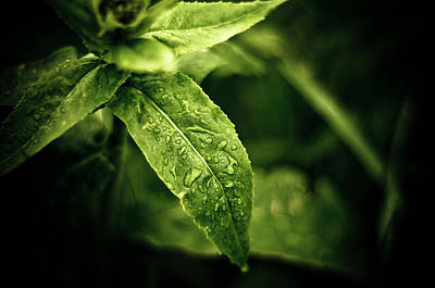 Raindrops Art Print by Jason Naudi Photography