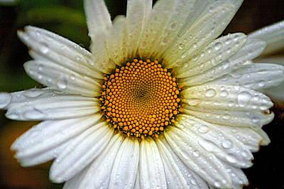 Raindrops On A Daisy Art Print