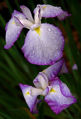 Photograph - Raindrops On Japanese Iris by Marie Hicks