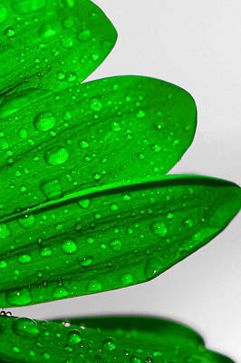 Photograph - Raindrops On Vibrant Green Flower by Sheila Kay McIntyre