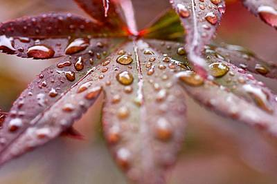 Art Print featuring the photograph Raindrops by Scott Holmes