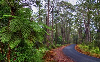 Rainforest - Port Macquarie - Australia Art Print by Bryan Freeman