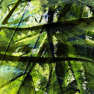 Abstract Digital Photograph - Rainforest Abstract by Bonnie Bruno