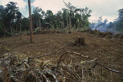 Rainforest Deforestation, French Guiana Art Print by Thomas Marent