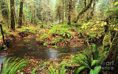 Photograph - Rainforest Flood by Adam Jewell
