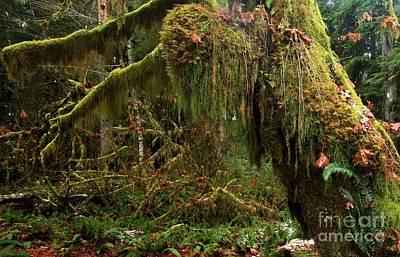 Photograph - Rainforest Jaws by Adam Jewell