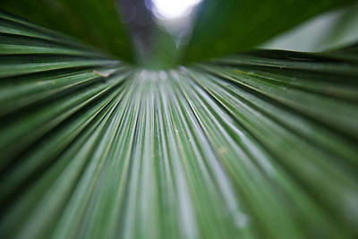 Photograph - Rainforest Leaf by Carole Hinding