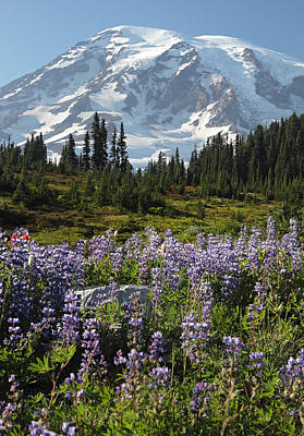 Photograph - Rainier Wild Flowers by Pierre Leclerc Photography