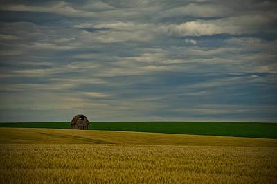 Photograph - Rainy Day Blues by Dan Mihai