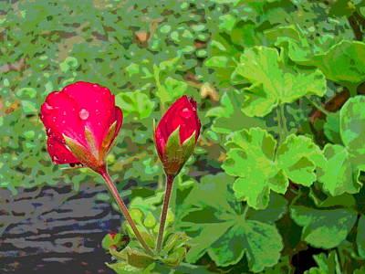 Rainy Day Geranium Flower Buds Art Print by Padre Art