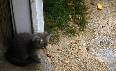 Door Photograph - Rainy Day Kitten by LeeAnn McLaneGoetz McLaneGoetzStudioLLCcom