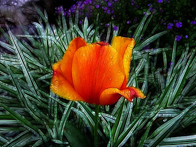Photograph - Rainy Day Orange Tulip Abstract by Cindy Wright