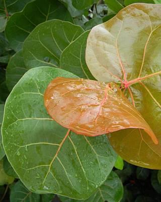 Rainy Day Sea Grape Leaves Original