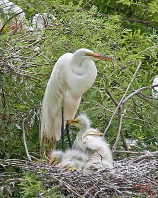 Raising Egrets Art Print