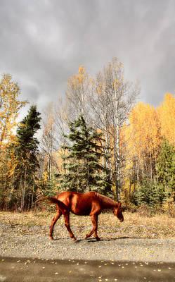 Range Horses Along British Columbia Road Art Print by Mark Duffy