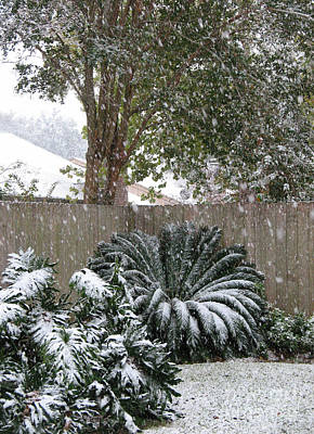 Photograph - Rare Snowfall In Tropical Houston by Connie Fox
