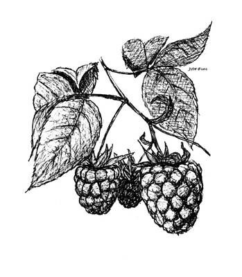 Raspberry Drawing - Raspberries by Daniel Paul Murphy