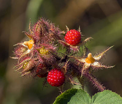 Photograph - Raspberry Color by David Lester