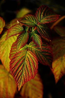 Raspberry Leaves Art Print