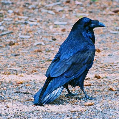 Photograph - Raven Blue by Eric Tressler