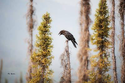 Photograph - Raven by Gary Rose