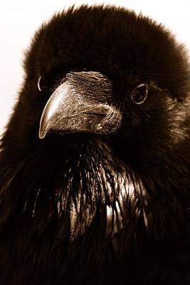 Raven In Black Art Print