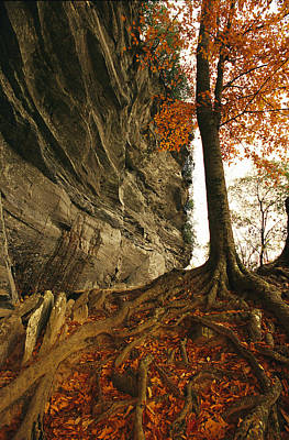 Raven Rock And Autumn Colored Beech Art Print by Raymond Gehman