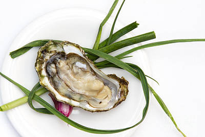 Raw Oyster Art Print by Charlotte Lake