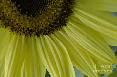 Art Print featuring the photograph Rays Of Sunshine by Tamera James
