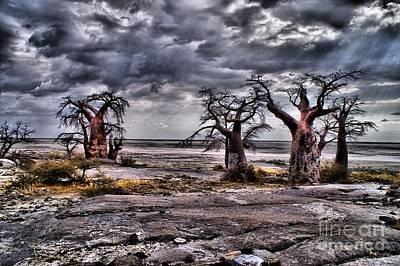Photograph - Rays On The Baobabs by Mareko Marciniak
