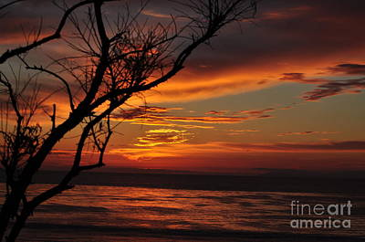 Photograph - Reaching For The Glow by Johanne Peale