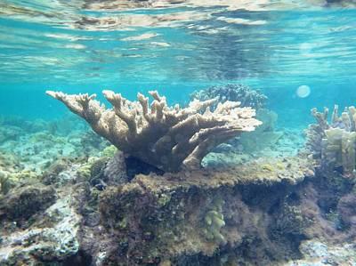 Under Water Photograph - Reaching Toward Heaven    by Paulette Ingersoll