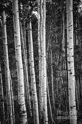Photograph - Reaching Upward by David Waldrop