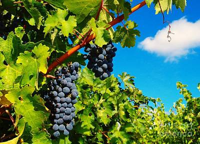 Blue Grapes Photograph - Ready For Harvest  by Jeff Swan