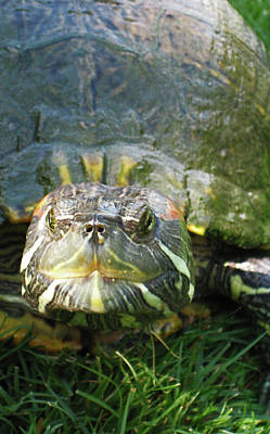 Photograph - Ready For My Close Up by Lorraine Devon Wilke