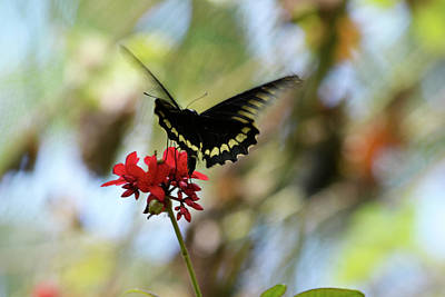 Fluttering Photograph - Ready To Land by Melanie Moraga