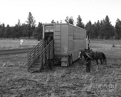 Photograph - Ready To Offload Cattle Hauler by Pamela Walrath
